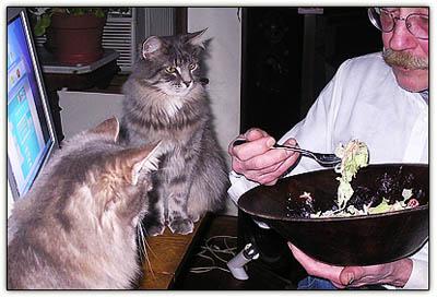 Saladcats3
