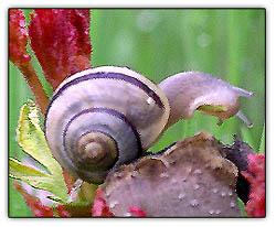 Snailspace_1