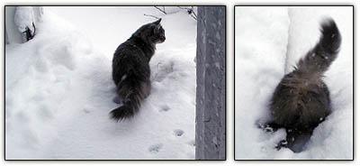 Snowbabyporch