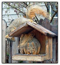 Squirrelsrule_1