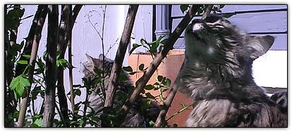 Sunshinecats