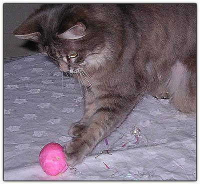 Tinyeggball