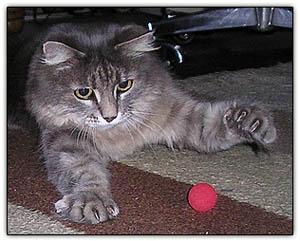 Tinygetsherball
