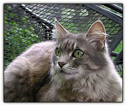 Whatsnewpussycat