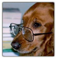 faithfuldog.jpg